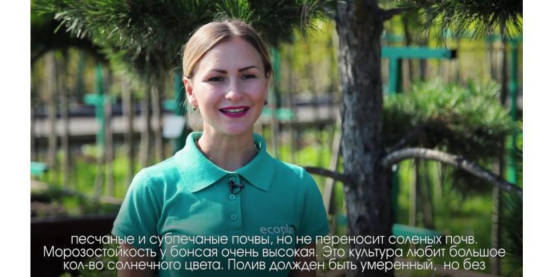 Энциклопедия - Бонсай